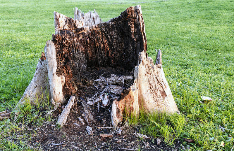 giant-rotten-tree-stump-ugly-middle-manicured-lawn-41074141